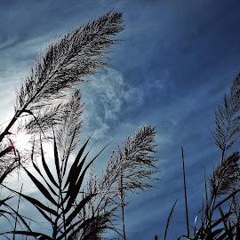 by Jeff Schartz - Landscapes Prairies, Meadows & Fields