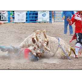 Hung Up On You by Gerri Johnson Podrug - Sports & Fitness Rodeo/Bull Riding