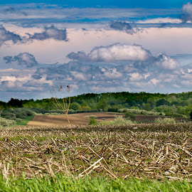 by Todd Yonkers - Landscapes Prairies, Meadows & Fields ( nature, beautiful, depth of field, nice, corn field )