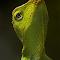 IMG_6765-PXILL.jpg