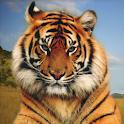 Animal Sounds Photo Animation