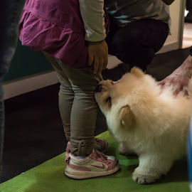 by Sveta Celik - Animals - Dogs Playing