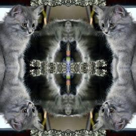 Little Mz. Blue 2 Bells by Randi Leimbach - Animals - Cats Kittens ( #kitten )