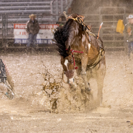Muddy Mustang by CA Eccles - Sports & Fitness Rodeo/Bull Riding ( cowboy, editorial, busting, horse, rodeo, bronco, bucking, muddy, mud, bucked, raining, buck, wet, rain, competition )