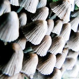 Mushroom  by Keerthesh GR - Nature Up Close Mushrooms & Fungi