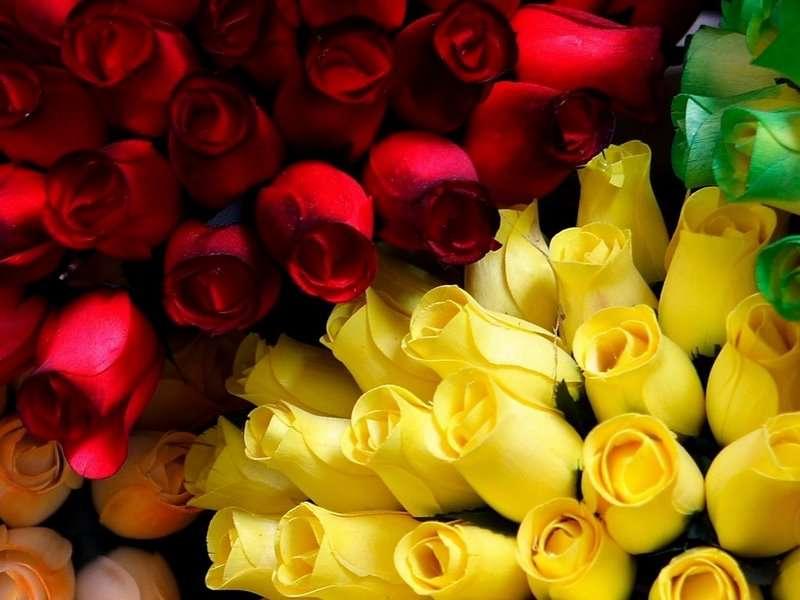 rosas pra você... Obrigada pela visita!