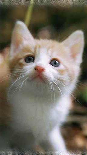 【免費攝影App】Catskurukuru-APP點子