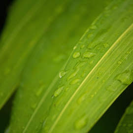 by Lindsey Crandall - Nature Up Close Leaves & Grasses