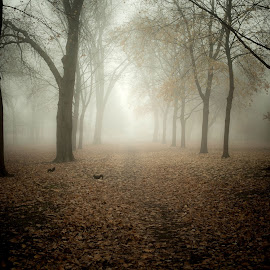 squirrels and fog in park by Ian Pettigrew - Landscapes Forests ( squirrels, park, fog, trees )