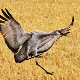 Crane in Field - Digital Oil by Steven Aicinena - Digital Art Animals (  )