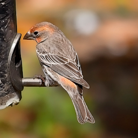 by Cynthia Babcock - Animals Birds