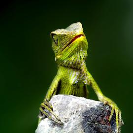 sinister by Hendrata Yoga Surya - Instagram & Mobile Android ( green crested lizards, bunglon surai )