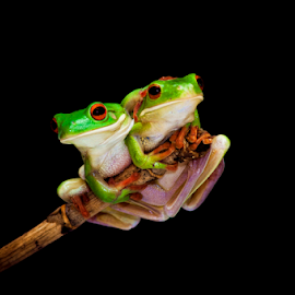 Forever with You by Robert Cinega - Animals Amphibians ( #GARYFONGPETS, #SHOWUSYOURPETS )