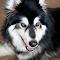 Wolf067.jpg