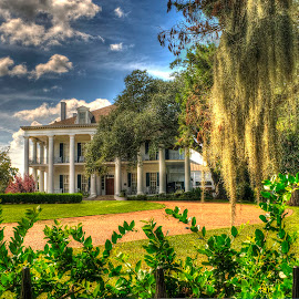 Dunleith Plantation by John Larson - Buildings & Architecture Homes ( clouds, home, sky, driveway, moss, columns, trees, flowers, shrubs )