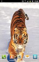 Screenshot of Amazing Tigers Wallpapers