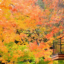 Balcony view of Autumn by Marco Antonio - City,  Street & Park  Neighborhoods ( montreal, quebec, canada, autumn, balcony )