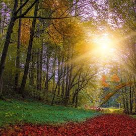 Autumn in sLOVEnija by Tomas Horvat - Landscapes Forests ( autumn leaves, autumn, forest, autumn colors )