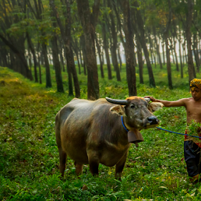 Herdsman by Firman Tirtawidjaja - People Professional People