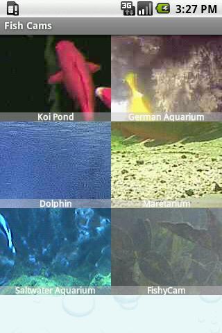 Fish Cams