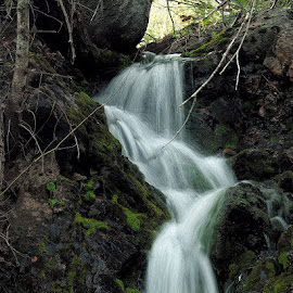 Fish Creek CO stream by Lowell Griffith - Nature Up Close Water ( stream, waterfall, moss, whitewater )
