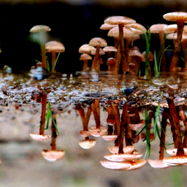 Refected mushrooms by Nelson Thekkel - Nature Up Close Mushrooms & Fungi