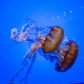 by Jim Malone - Animals Sea Creatures