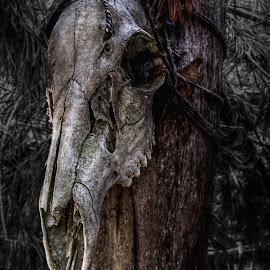 Skull by Austin Rupp - City,  Street & Park  Historic Districts
