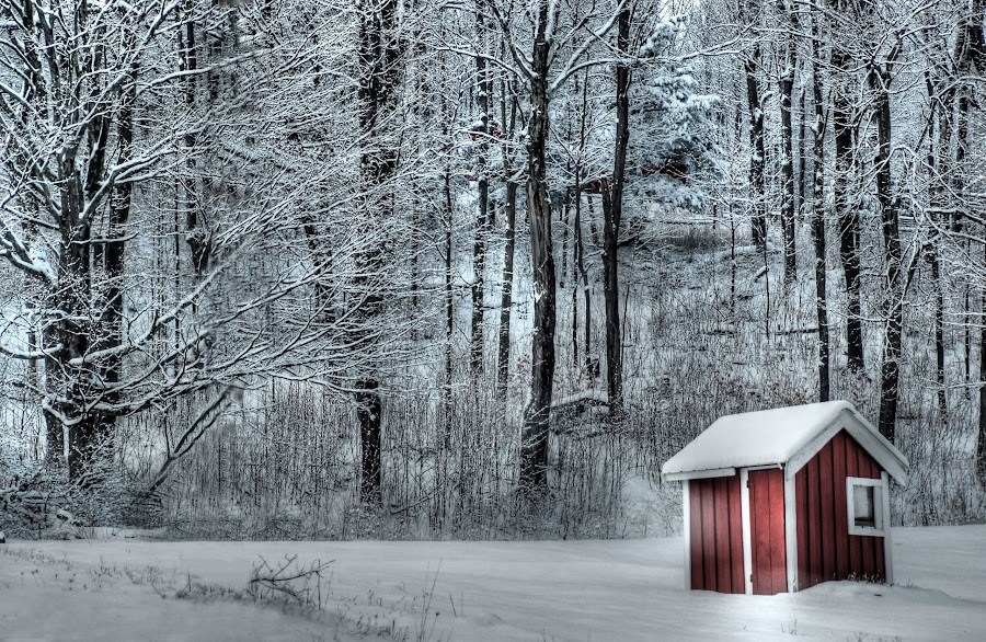 Winter's Light by Liz Crono - Landscapes Forests ( red, winter, barn, landscape )
