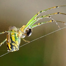 Spider by Frank DeChirico - Nature Up Close Webs