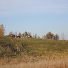 by Dawn Price - Landscapes Prairies, Meadows & Fields