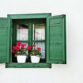 red geraniums in window by Alida Boari - Buildings & Architecture Other Exteriors ( geraniums, red, window, green, white, flowerpot )