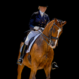 Dressage by Erik Kunddahl - Sports & Fitness Other Sports ( equine, dressage, equipage, riding, equstrian, horse )