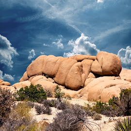 Joshua Tree National Park 2014 by Cynthia Karlow - Landscapes Deserts