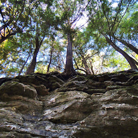 Up a Cliff by Jim Czech - Nature Up Close Rock & Stone ( cliffs, tree, cliff, canyon, trees,  )