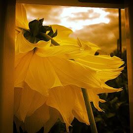 Flamenco by Nancy Senchak - Instagram & Mobile iPhone