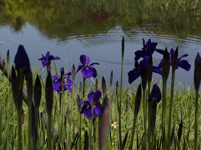 080506 FlowerFest.