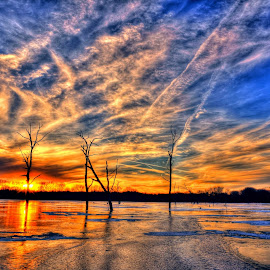 4 Trees by Derrill Grabenstein - Landscapes Sunsets & Sunrises ( ice, sunset, frozen lake, trees, landscape )