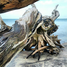 Post Hurricane Sandy Driftwood, by Stephen Coleman - Nature Up Close Trees & Bushes ( Amagansett, NewYork )