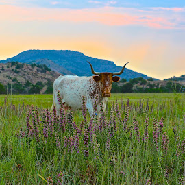 Grazing In Purple by Kathy Suttles - Landscapes Prairies, Meadows & Fields