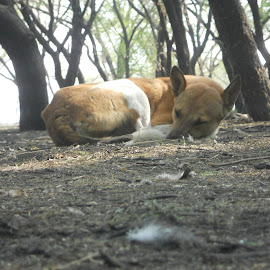 sleeping dog by Dhara Kadia - Animals - Dogs Running