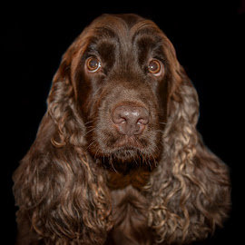 Fleur Coco's Mum by Brian Noel - Animals - Dogs Portraits