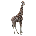 Giraffe Sticker icon