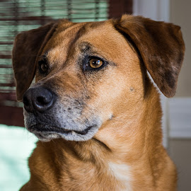 by Michael Last - Animals - Dogs Portraits ( molly lastwitz, dog portrait, dog,  )