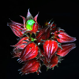 Hibiscus subdarifa#3 by Asif Bora - Food & Drink Fruits & Vegetables (  )