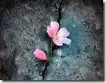 flor_na_pedra2