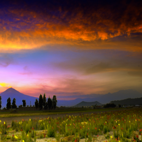 Sunset ,, volcano and flowers by Cristobal Garciaferro Rubio - Landscapes Prairies, Meadows & Fields