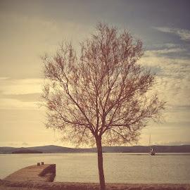 The tree by the sea by Marko Dragović - Instagram & Mobile Android ( sky, tree, croatia, sea, seascape )