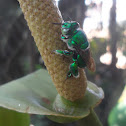 Green orchid bee