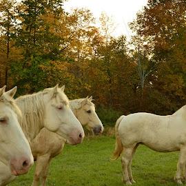 by Dia Helen - Animals Horses